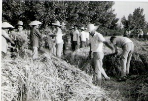 Farmers During the Cultural Revolution 1970