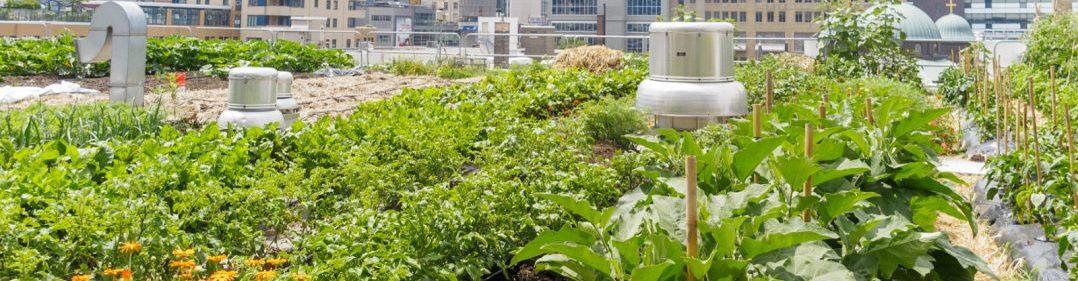 Urban School and Community Gardens