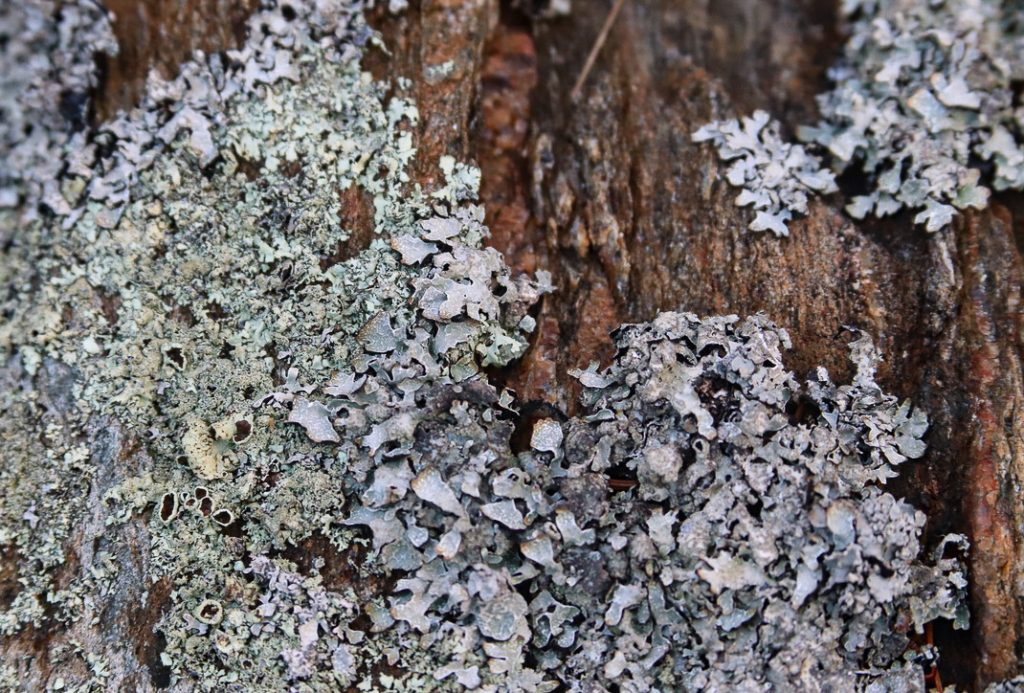 """""""Texture 2"""". Giant Steps, Bailey Island, Maine. Lichen on rock. Digital photograph. Dimensions variable."""