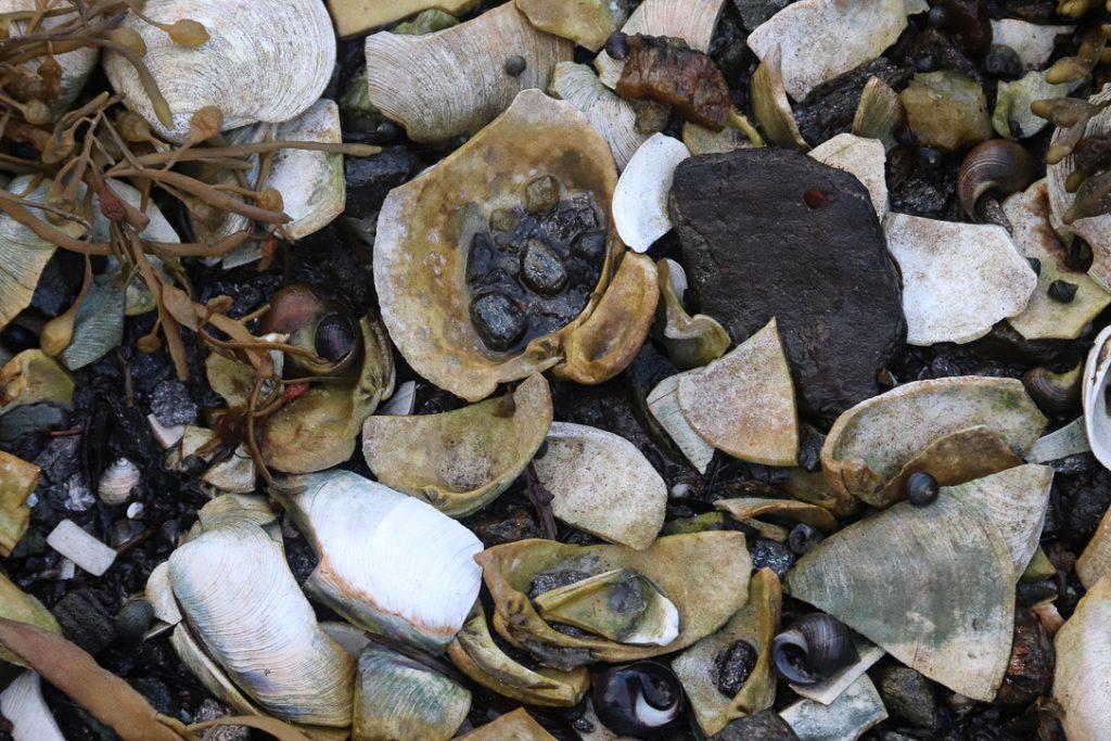 """""""Texture 3"""". Cedar Beach, Bailey Island, Maine. Tide pool. Digital photograph. Dimensions variable."""