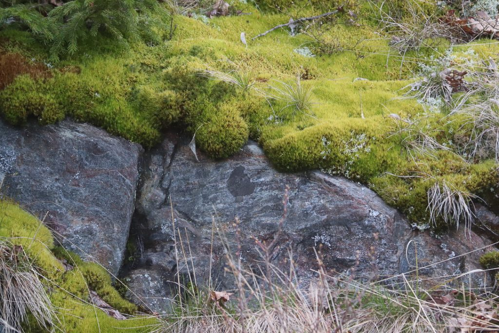 """""""Texture 7"""". Devil's Back Trail, Bailey Island, Maine. Moss on rock. Digital photograph. Dimensions variable."""