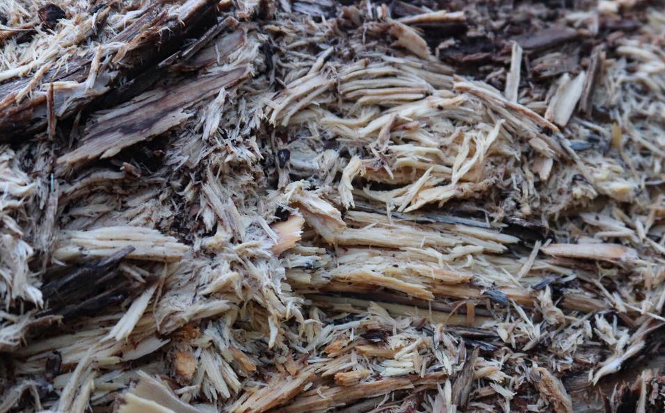 """Texture 8"". Cundy's Harbor, Sebascodegan Island, Maine. Rotting log. Digital photograph. Dimensions variable."