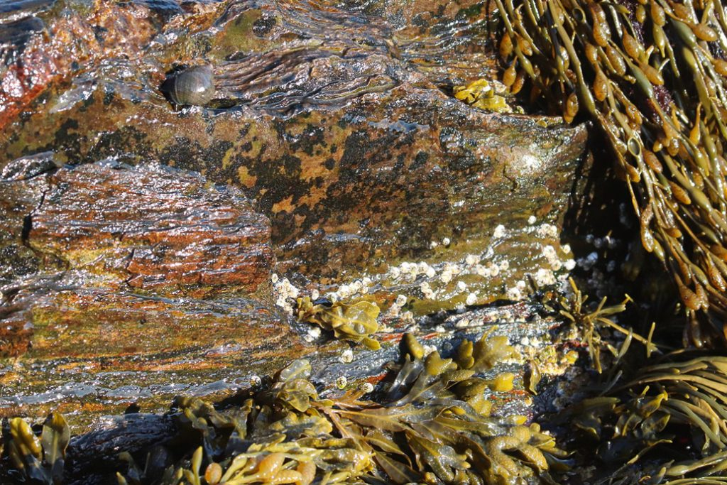 """""""Texture 9"""". Land's End, Bailey Island, Maine. Tide pool. Digital photograph. Dimensions variable."""