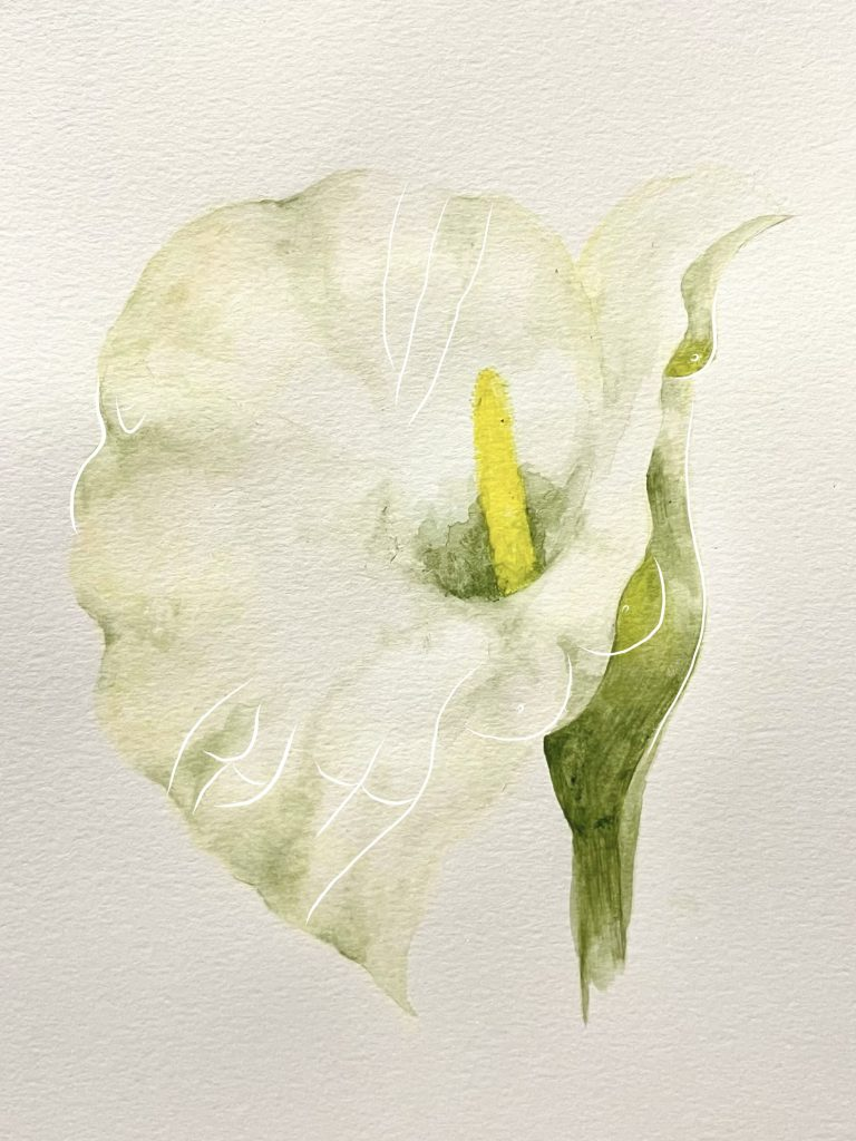 2. Calla Lily, water colour and digital drawing, 2021