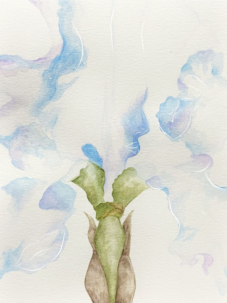 5. Light Iris, water colour and digital drawing, 2021